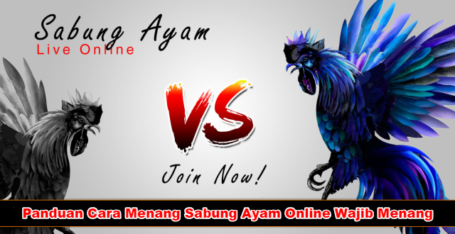 Cara Menang Sabung Ayam Online